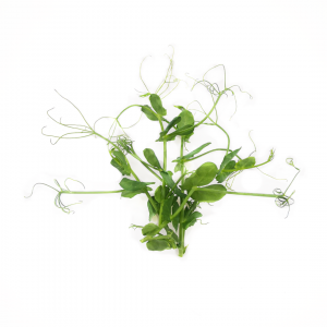 Arugula / Rocket microgreens 30g
