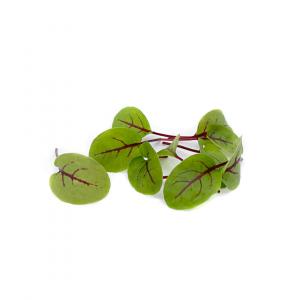 Daikon radish microgreens 50g