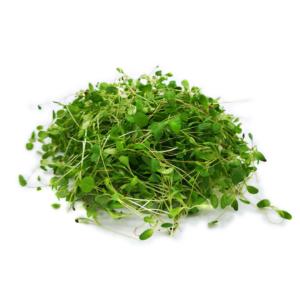 Alfalfa microgreens 30g