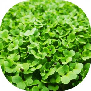 Broccoli microgreens 30g