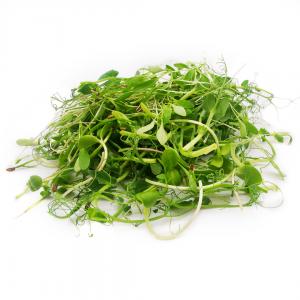 Indian microgreens Salad Mix 70g