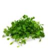 Micro coriander micro cilantro